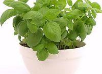 Plant 'em Greens!