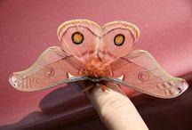 Moths/Butterflies.