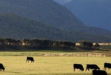 Country scenes.