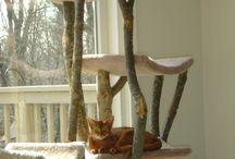kattetræ
