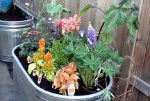 gardening / by Betty Haney