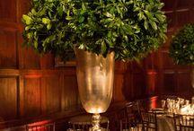 dekoracje bukszpan