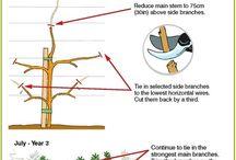 tree styling