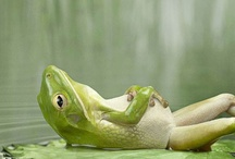 Frogs / I love frogs they make me smile!