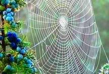 Beautiful spider silk