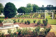 Rose Gardens / Beautiful Rose Gardens!