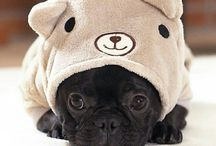 Pugs♡