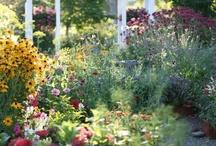 Garden Inspiration / by Melanie Bestwick