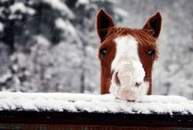 I want a Horse!! / by Beverly Cabaday