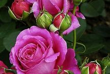 Pretty Flower Pictures