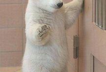 Animale:)))