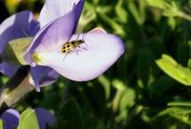 "my snapshots of ""purple"" / by Annette Wiseman-Vaughan"