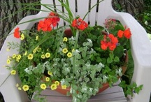 Inspiring Container Planting