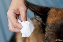 Pet Health / Animal Health