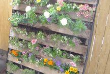 Gardening  / Indoor, outdoor - I just love gardening.