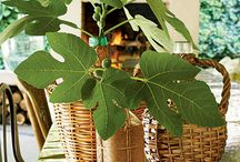 Plant-based Decorating Ideas