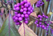 Specielle planter / Særlige planter, der ikke findes alle steder.