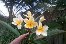 Flora / French Polynesia Flora