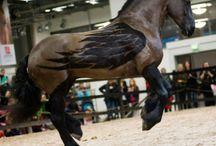 Horse - эти забавные лошадки
