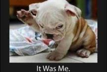 Pup stuff