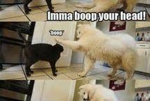 Funny stuff. Lol