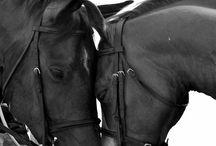 Αγαπημενο κι Αλογο..... / Horses...