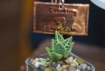 Succulent Love / Bouquets, Centerpieces, Favors, and all things succulent. / by Nicole Dybenko