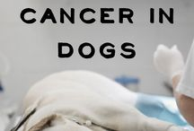 Interesting dog health stuff