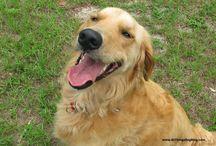 #SilverSlippers: Tips for Inspiring Your Senior Dog's Walk