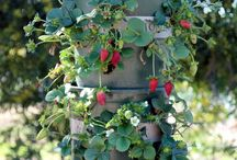 Jordbær i spande stablet over hinanden