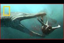 dinosaurus video