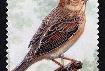 znaczki ptaki