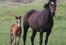 The Horse & Pony