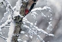madaras állatos képek