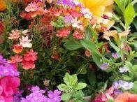 květíny