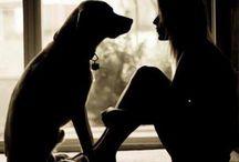 Perros y uñas
