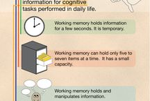 Working memory and executive functions