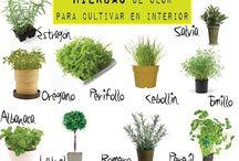 jardín plantar