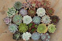 Pozsgások,kaktuszok, stb...