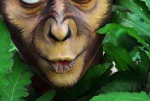 monkey puck