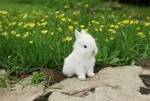 Cute / by Ellen Siegman