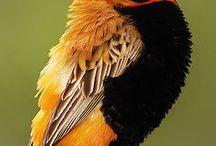 Birds / by Brenda Ison