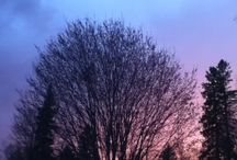 Photography Of Nature / Pictures of trees, sunsets, flowers, fashion... And that I take!