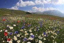 Castelluccio di Norica / Foto di Castelluccio di Norcia, della fioritura e dei piatti tipici