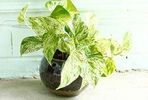 Plantas Colgantes / Ideas de plantas colgantes, plantas con macramé