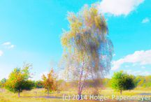 Autumn 2014 / Herbst 2014 / Fotografie, Pflanzen, Bäume, Natur, HDR