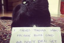 Cat Shaming / These Cats Honestly Could Not Care Less That They're Being Shamed