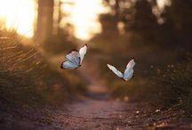 > < Flitter...Flutter... Fly > <