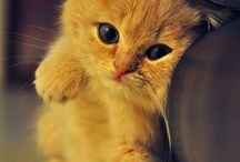 THIS CAT IS CUTE RIGHT?