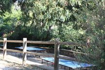 Le Lavandou - Le Domaine de la Pinède / Découvrez la résidence Goélia Le Domaine de la Pinède située au Lavandou. Passez un séjour au calme sur les hauteurs du Cap Nègre. Profitez de la piscine à débordement de la résidence et d'un accès direct à la plage de Pramousquier.
